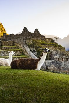 10 Things You Need to Know Before You Go to Machu Picchu - Machu Picchu is one of the world's most coveted (read: bragged about) travel experiences, with 1.4 million people having visited Peru's mountain top Inca ruins in 2016. But despite the destination's popularity, you can't just wing it. A successful visit to Machu Picchu requires careful planning and insider knowledge. Here, everything you need to know.