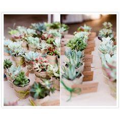 suculentas regalos invitados boda original originales recuerdos eventos suculentas en macetas plantas suculentas