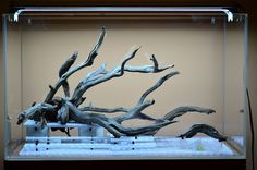 Fallen Tree Branch 60cm (jungle mode) - The Planted Tank Forum