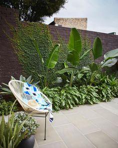 Tropical Backyard Landscaping, Tropical Garden Design, Backyard Garden Design, Balcony Garden, Tropical Patio, Stone Landscaping, Tropical Gardens, Ficus Pumila, Outdoor Pots