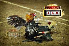 Agen Judi Ayam Online Terbaik Indonesia, Keuntungan Besar Judi Ayam Online Uang Asli, Situs Judi Ayam Online Terpercaya, Link Alternatif Judi Ayam Online Terbaik, Deposit Termurah Judi Tarung Ayam Online Makassar, Juni