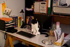 Office Ideas, Home Office, Home Appliances, Study, Desk, Google, Home Decor, House Appliances, Studio