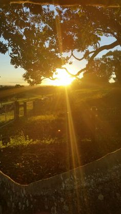 Golden sunsets in the Byron Bay Hinterland