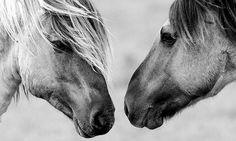 caballo2 Fotos de animales en blanco y negro