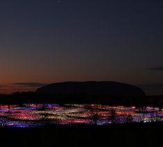 Field of Light  http://www.brucemunro.co.uk/