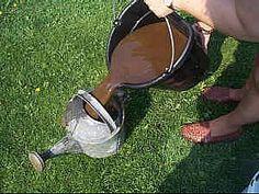 Kompostový čaj – hnojivo, za ktoré vás budú rastliny milovať - Záhradkárčenie…
