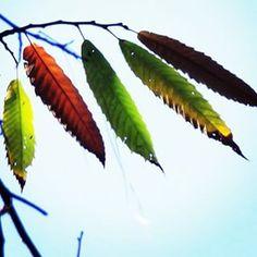 pic, fotografia,folhas, outono, sao francisco xavier