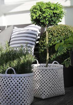 Pflanzen in großen Körben dekorieren.