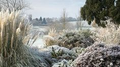 Frost in the Dry Garden at Hyde Hall