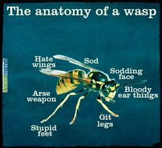 Funny memes Anatomy Of A Wasp...