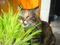 Desenhando - você precisará de: 1 - Um pote, vaso ou jardineira. Isso dependerá do número de gatos que você tem. Caso ten...