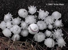 Hail (with baseball for size comparison)--Wow--not-so-sweet nature! Wouldn't want to get hit with that! Tornados, Thunderstorms, Hail Storm, Wild Weather, Other Mothers, Look At The Stars, Severe Weather, Natural Disasters, Natural Wonders