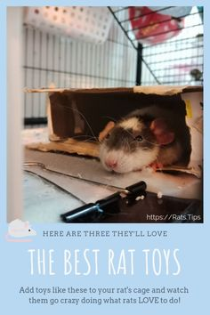 If you buy or make rat toys with these things in common, your rattos will have a blast playing. and you'll enjoy watching them, too! Diy Rat Toys, Dog Toys, Pet Rat Cages, Rat Cage Accessories, Rat Care, Les Rats, Fancy Rat, Cute Rats, Buy Pets