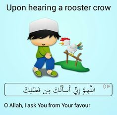 A rooster crows when it has seen an angel Islamic Teachings, Islamic Prayer, Islamic Dua, Beautiful Dua, Beautiful Prayers, Islamic Images, Islamic Pictures, Religious Quotes, Islamic Quotes