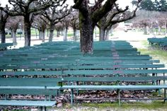 abandoned benches in GG Park