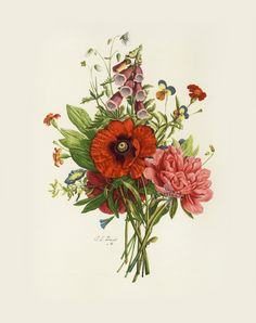 How beautiful is this etching !! Botanical Etchings after Tessier, Prevost, Van Geert