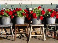 Secrets to growing geraniums Just Enough Antique's signature reds