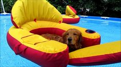 """The """"Coolest"""" Golden Retrievers   The Animal Rescue Site Blog"""