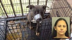 DEMAND JUSTICE & MAXIMUM PENALTY for Florida SAVAGE who cages her dog in filth with muzzle taped shut AND LEAVES HIM OUT IN THE SCORCHING SUN!  PLZ Sign & Share!