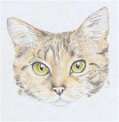 Die Katze ist sehr graziös. Viele von Ihnen möchten bestimmt irgendwann die Katze selber zeichnen. Hier gibt es die Möglichkeit und die einfache Anleitung.