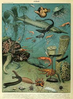 Marine life poster of the Oceans by Adolphe Millot. free to download along with several others, Illustration Inspiration, History Posters, Science Illustration, Ocean Illustration, Graphic Illustration, Life Poster, Antique Illustration, Animal Posters, Fish Print