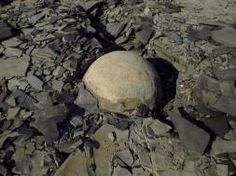 """""""cannon ball"""" concretion:  Kettle Point, Ontario, CA"""