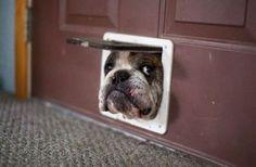 Precious! Bulldog lovin'.