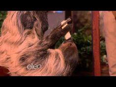 Ellen - Kristen Bell Meets A Sloth