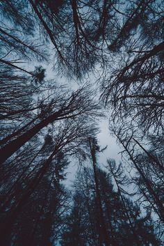 Winterwipfel (by Sebastian Fischer)