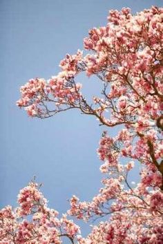 Cuadro In Bloom VI