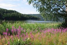 one of sweden's lakes - Arvika, Varmland  (Swanson)