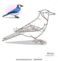 Blue Jay Bird Learn Birds Educational Game Coloring Book Raster Illustration