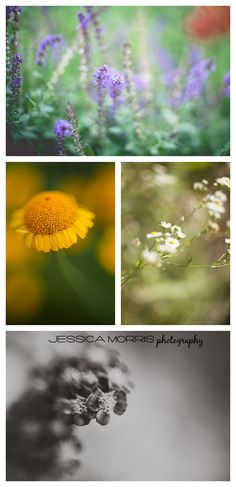 Freelensing images.   Jessica Morris Photography www.jessicamorris.us