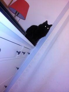 Bady mi gatito