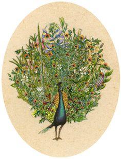 Peacock by seiko Kato
