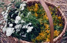 Homegrown Medicine: not everyone realizes how well traditional herbal medicine can work, or that you can grow them on your own land. From MOTHER EARTH NEWS magazine.