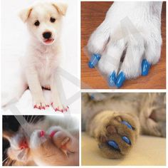 200Pcs/Lot Soft Pet Dog Cats Kitten Paw Claws Control Nail Caps Cover Colorful Size XS S M L XL XXL Hot Free Shipping