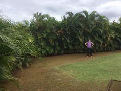 amazing palm fencing