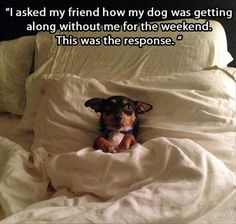 Funny Animal Pictures – 42 Pics