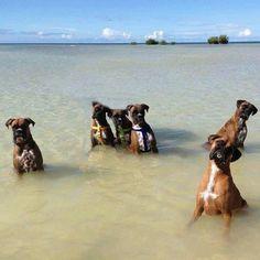 buncha wet boxers