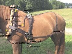 Ruotsalainen työvaljastus / tamppivaljastus: video, valjaiden osat, ohjeet | mw hevospalvelut
