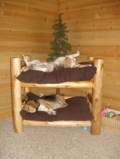 Dog Bunk Beds for Large Dogs . Dog Bunk Beds for Large Dogs . Two Story Dog Bed Dogcrateoutdoor Dog Bunk Beds, Pet Beds, Cute Dog Beds, Puppy Beds, Doggie Beds, Pet Puppy, Animals And Pets, Cute Animals, Log Bed
