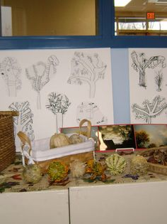 invitation to draw from nature