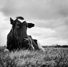 Stunning Black and White Photos Offer a Look into the Inner Lives of Farm Animals (PHOTOS)