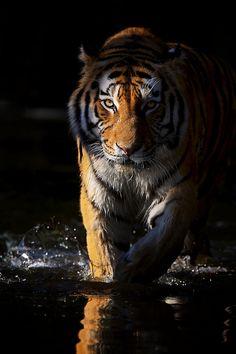 Love fauna