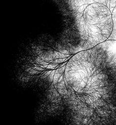Neuron Fractal
