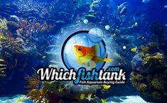 Fish Aquarium Buying Guide Acrylic Aquarium, Aquarium Kit, Home Aquarium, Marine Aquarium, Saltwater Aquarium, Marine Fish Tanks, Marine Tank, Community Fish Tank, Cool Fish Tanks