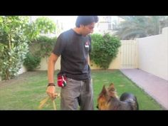 Lovable Dogs  How To Teach Your Dog To Stop Pulling - Lovable Dogs