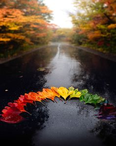 Shades of autumn? Photography by . Fall Inspiration, Travel Inspiration, Fall Photos, Nature Photos, Autumn Pictures, Nature Living, Destinations, Autumn Aesthetic, Autumn Photography