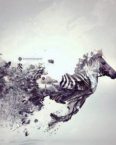 zebra horse and various fish have been put in photoshop to make a beautiful creation of a great big jumble of randomness. Design Poster, Art Design, Photomontage, Graphic Design Typography, Graphic Art, Illustrations, Illustration Art, Digital Media, Digital Art